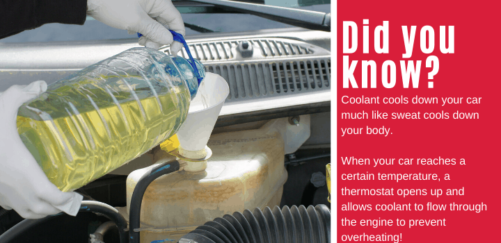 Did you know: Coolant cools down your car much like sweat cools down your body. When your car reaches a certain temperature, a thermostat opens up and allows coolant to flow through the engine to prevent overheating!